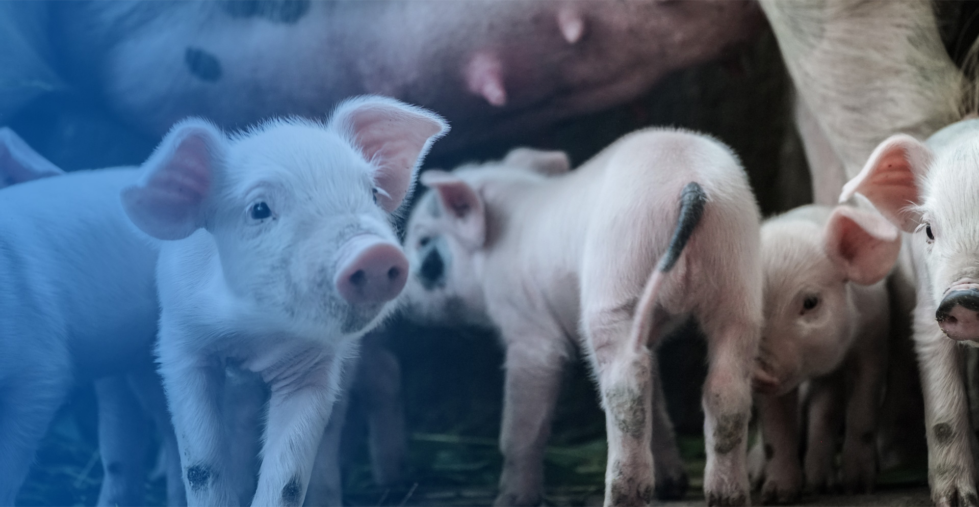We are committed to help animals to </br>eat well,grow well